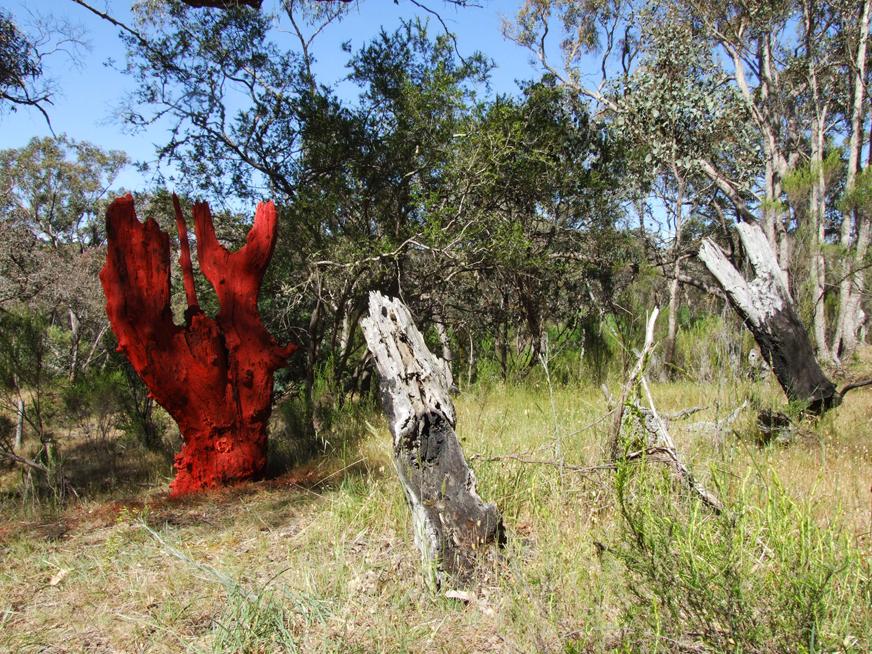 Appropriated tree stump. Shepherds Flat 2014